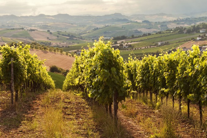 ampelones-wineroads