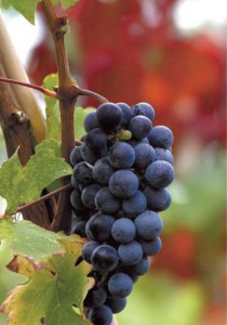 pella-wineroads3