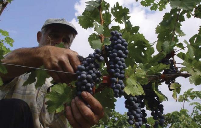 pella-wineroads6
