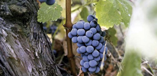 wineroads-chalkidiki6