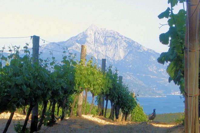 mountathos-wine1