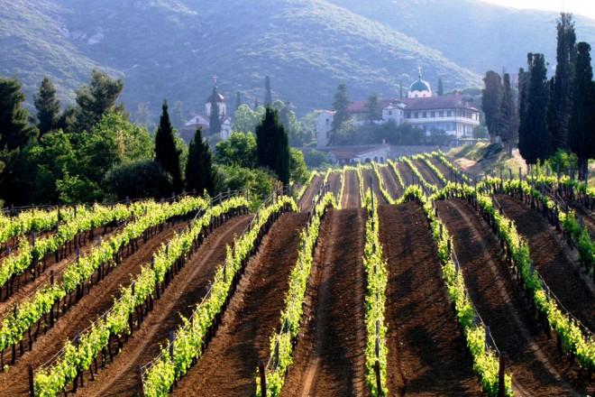 mountathos-wine2