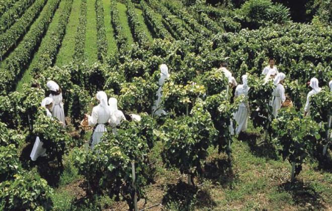 naoussa-wineroads5